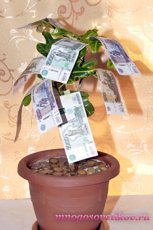 Поздравление на свадьбу к денежному дереву